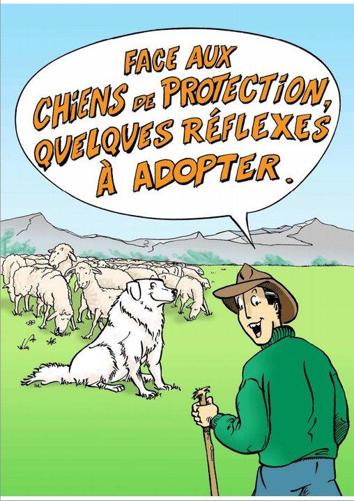 ec chiens education canine vous présente la bd face aux chiens de protection, quelques réflexes à adopter