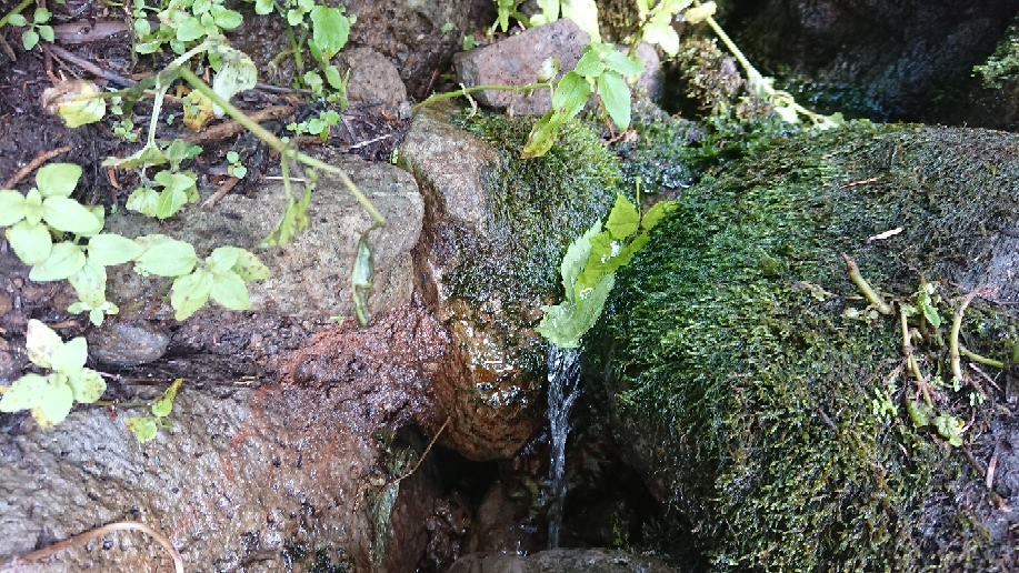 """Eine Quelle, mit der """"leaf method"""" kommt das Wasser in die Flasche"""
