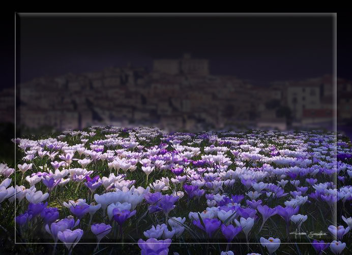 Chi guarda solo i fiori, e non va oltre, è destinato a non sentirne il profumo. (giosco)
