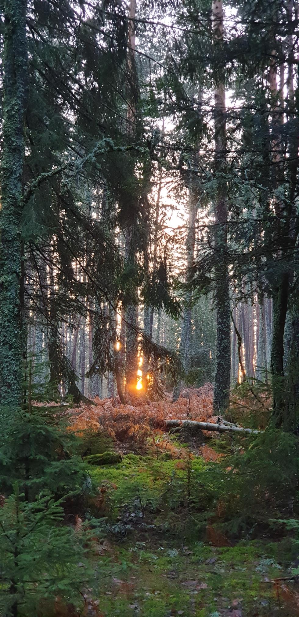 Vogesenwald