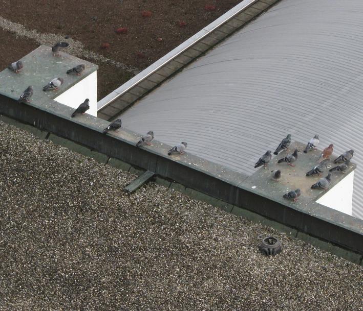 ORNITEC: Vogelabwehr auf Flachdächern