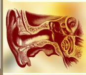 Osteopathie Behandlung von Tinnitus in Osteopathie Praxis Butt in München Schwabing