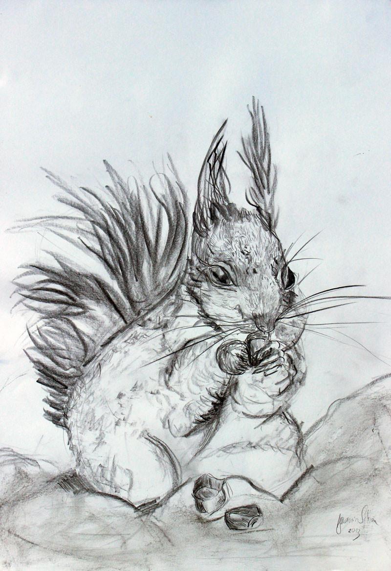 Dickes Eichhörnchen, Bleistift & Kohle