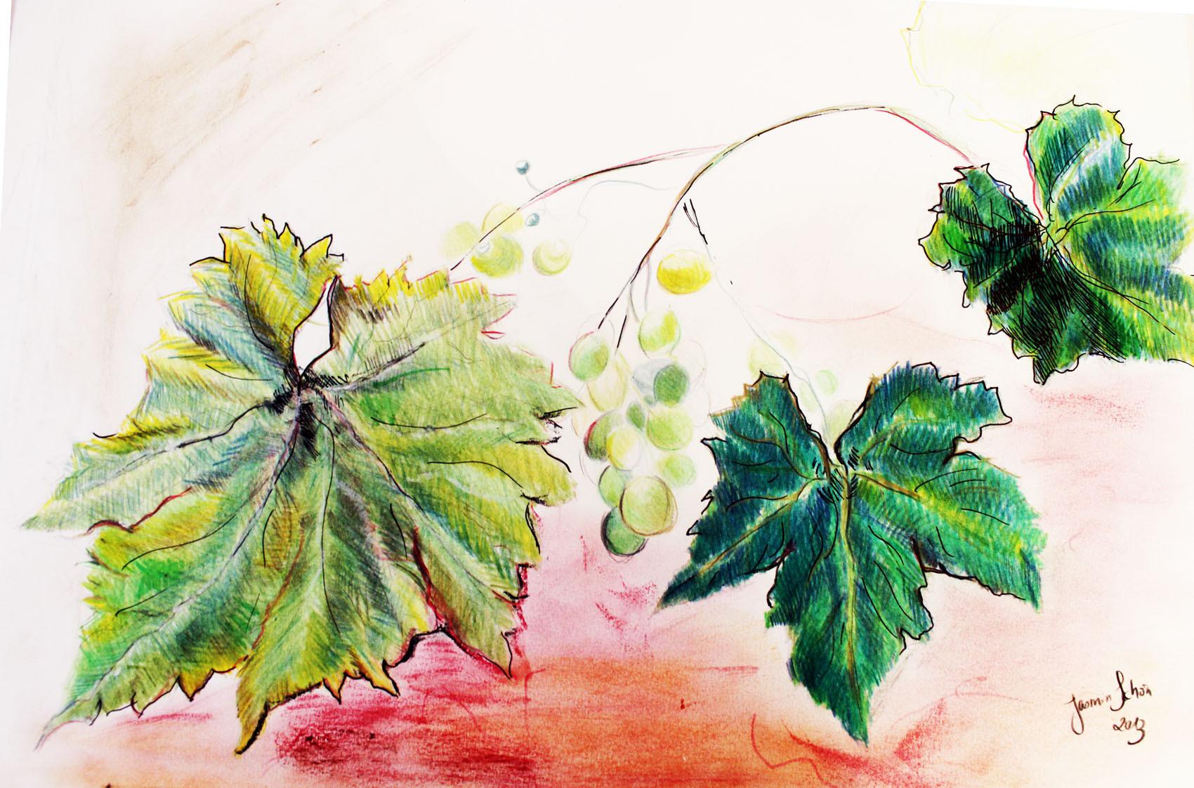 Weintraubenblätter, Farb- & Tuschestifte