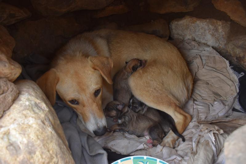 Straßenhündin hat Junge bekommen, Reisende kümmern sich und füttern