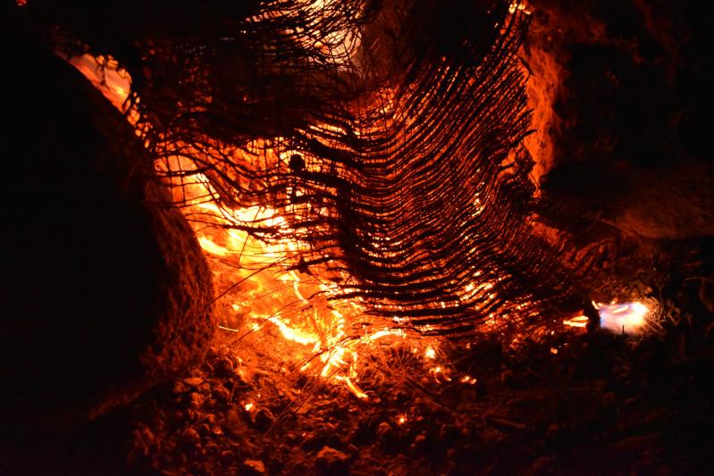 Palmenfeuer