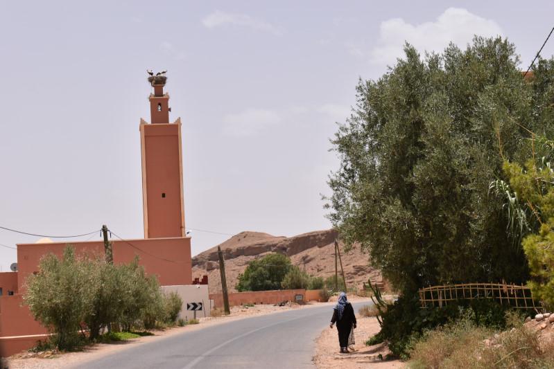 Störche auf der Moschee