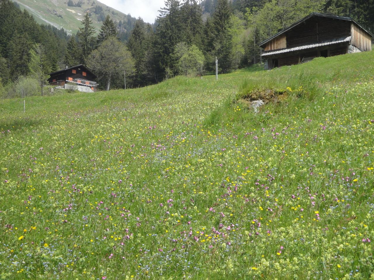Skihaus in der Ferne