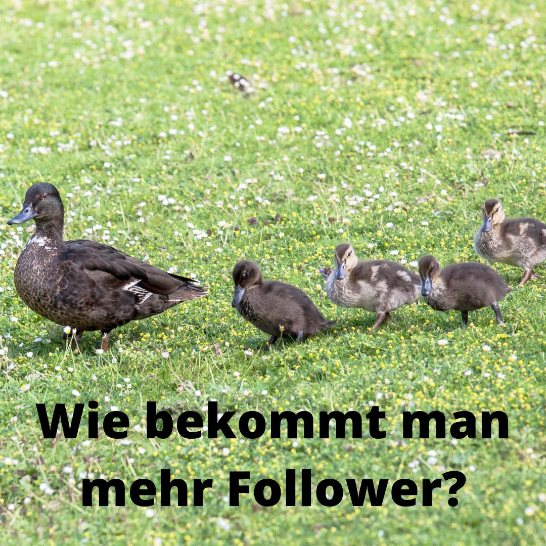 Wie bekommt man mehr Follower?