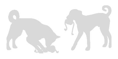 Hunde spielen mit einem Kong