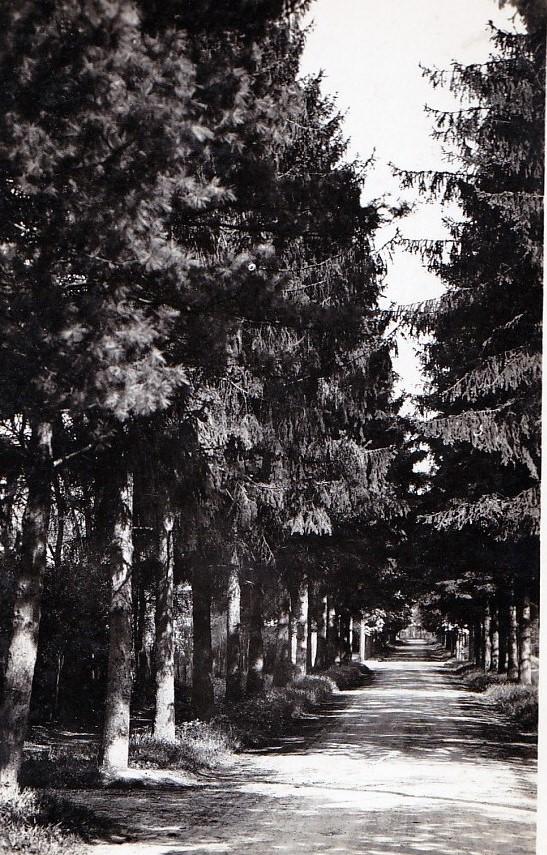 maisons-laffitte avenue augereau