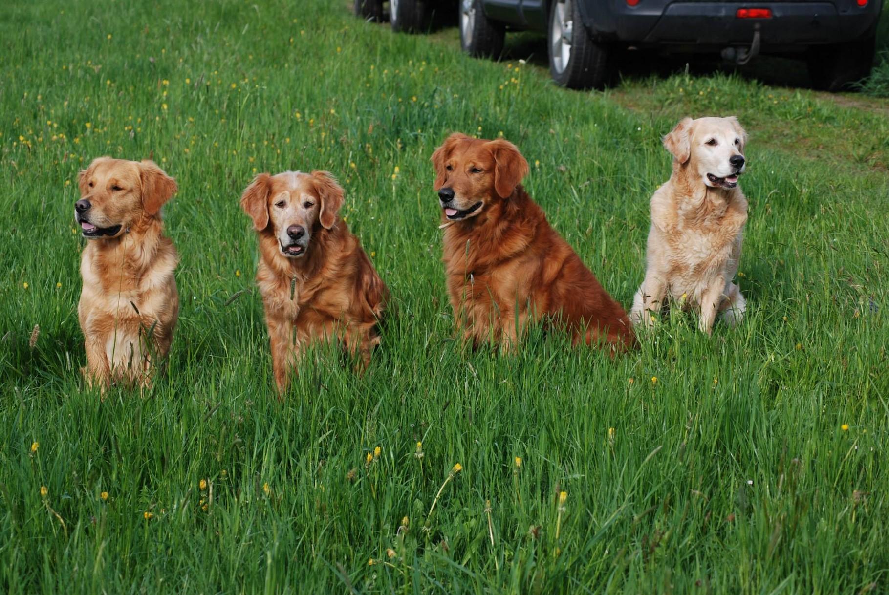 Finlay, Richie, Bandit und Elly-Mama