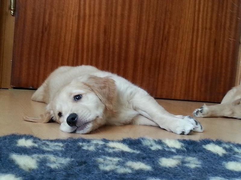 Easydog's Brave Kim mit Schlafzimmer Blick