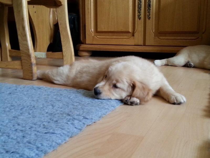 Easydog's Brav Sunny so müde!