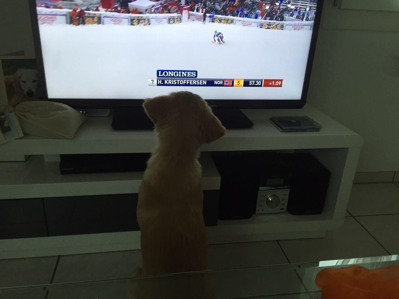 Kim schaut Schkifahren!! Ob die Österreicher gewinnen man bleibt seiner ersten Heimat treu!
