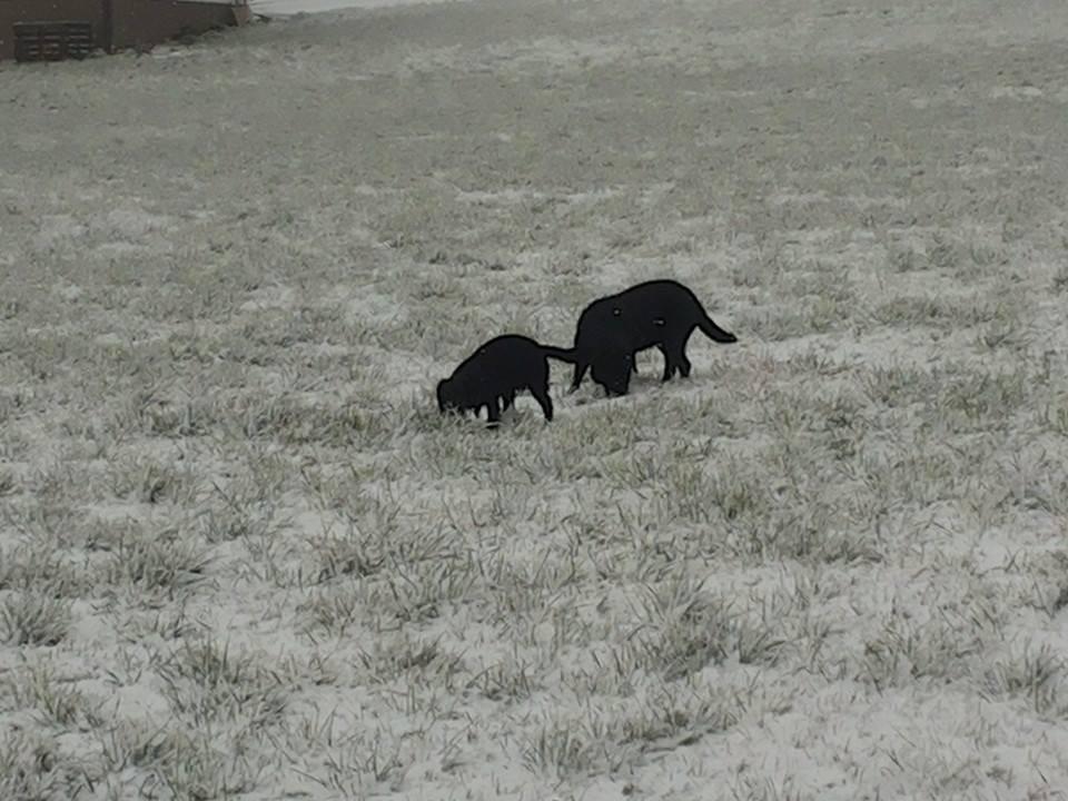 Meine zwei Schnüffelnasen!