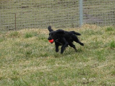 Ich hab den Ball Mami!!!