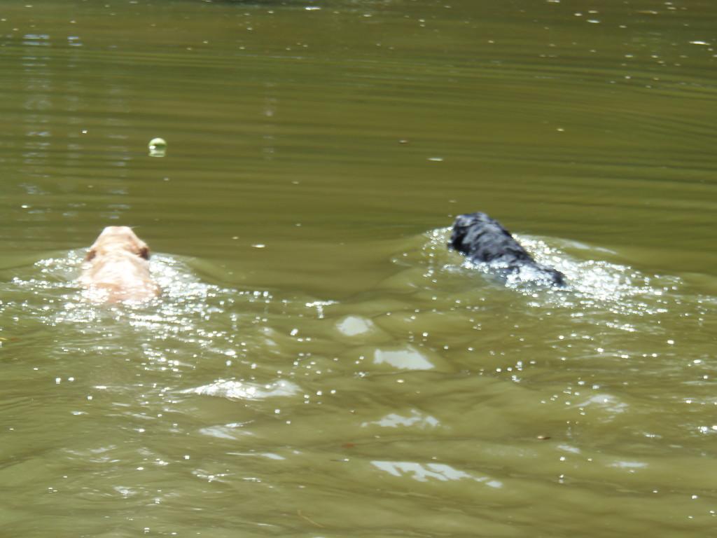 Mia und Elly schwimmen zum Ball Mia war schneller