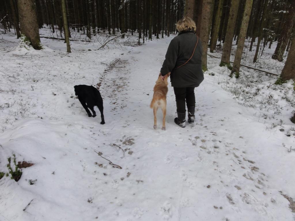 Luki auf der suche nach den Hasen