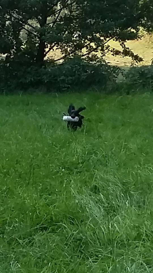 Flying Billy