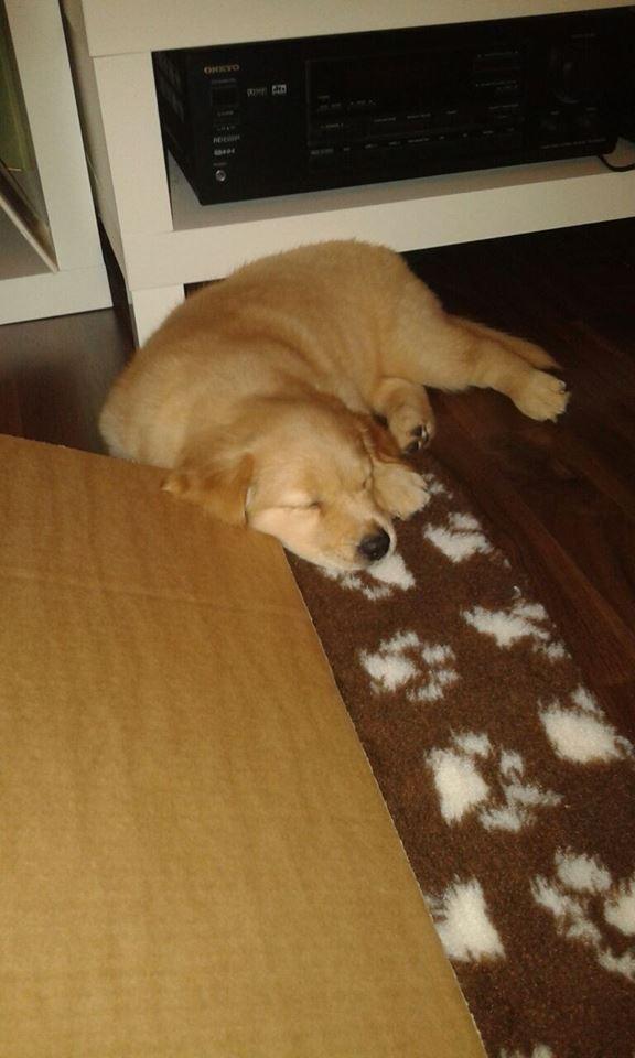 Easydog's Brave Sunny