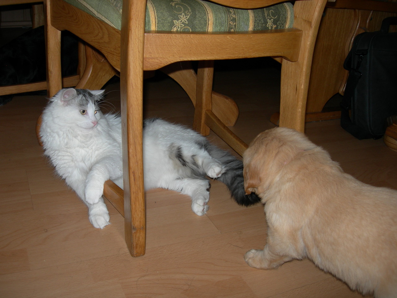 Oh ne Katze kann man die fressen?