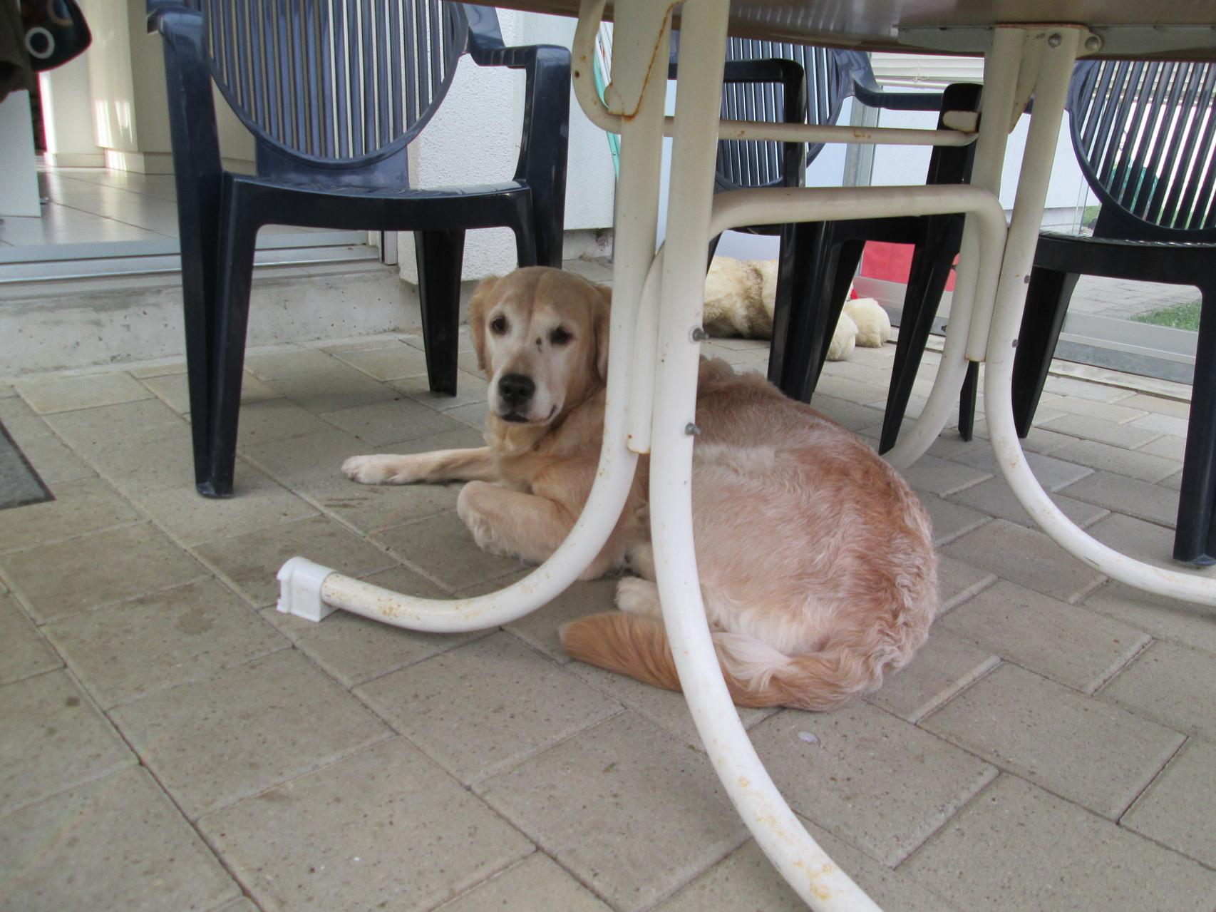 Elly ganz zufrieden unterm Tisch