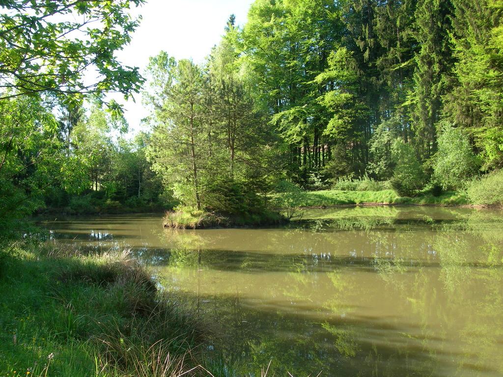 Ein herrlicher Teich