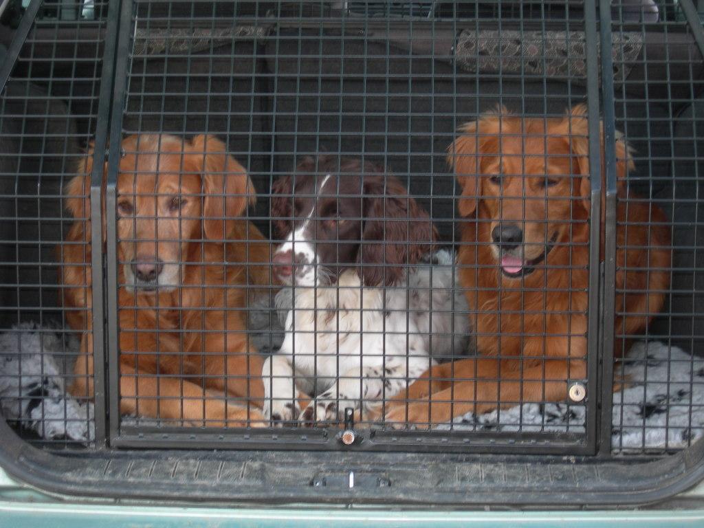 Die drei bei mir im Auto