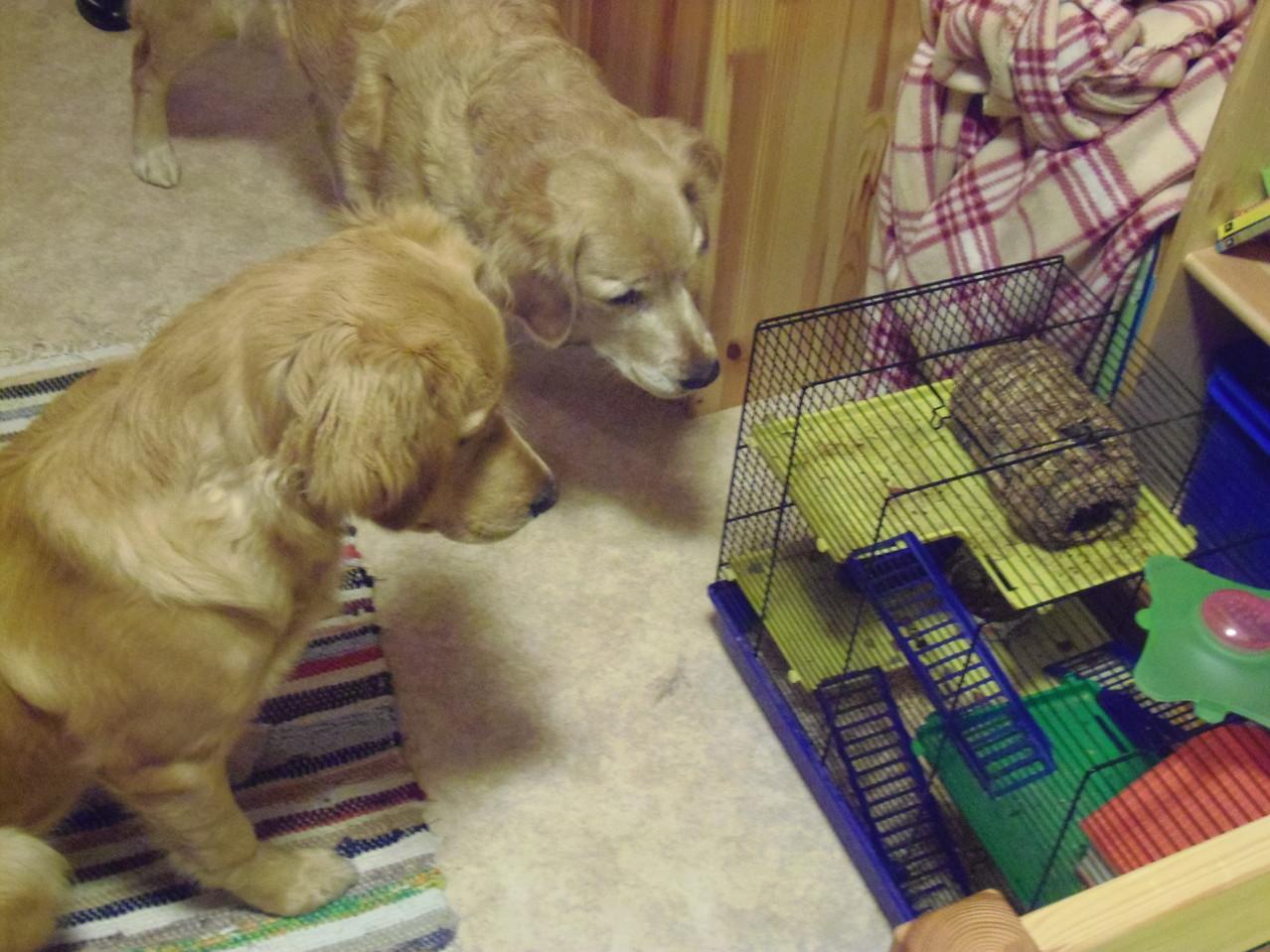 Der kleine Hamster fasziniert