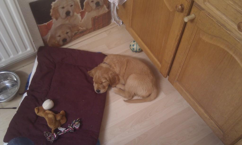 Nando schläft