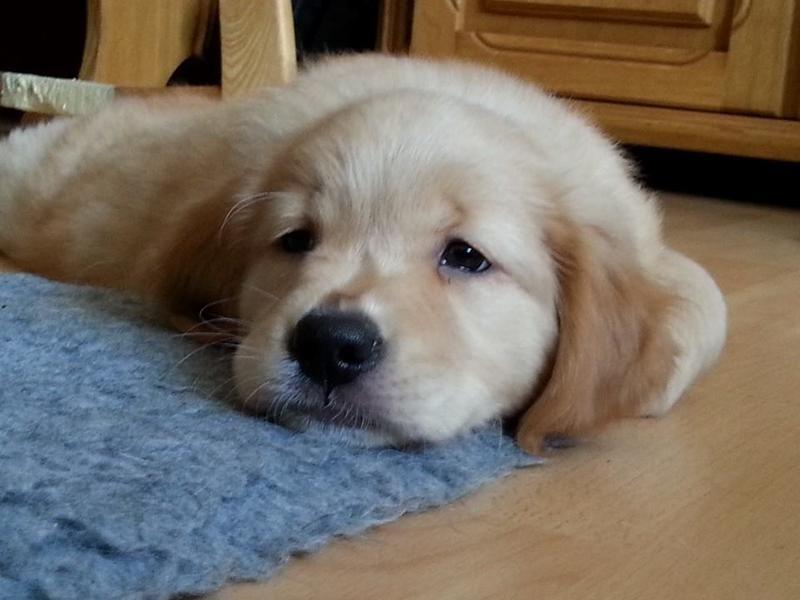 Müde!! Schlaf gleich!! Sunny unser Kuschelmonster!
