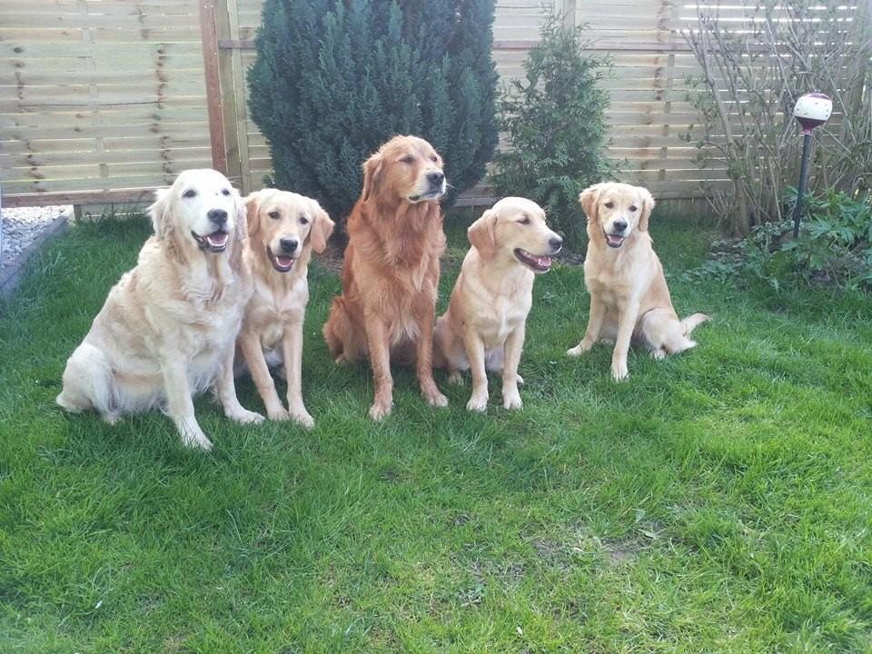 Der B- Wurf!! Elly, Fly, Finn, Kim und Sunny