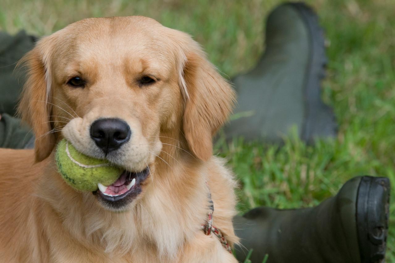 Hab mir einen Ball geklaut