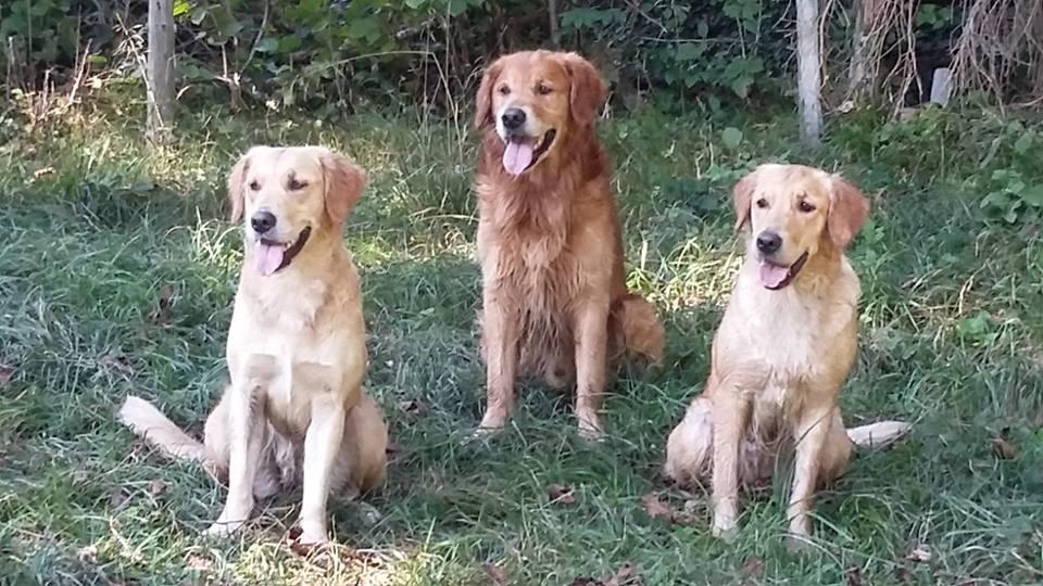Familientreffen!! Papa Finn und Schwesterchen Kim mit Frauchen Flavia schön wars!