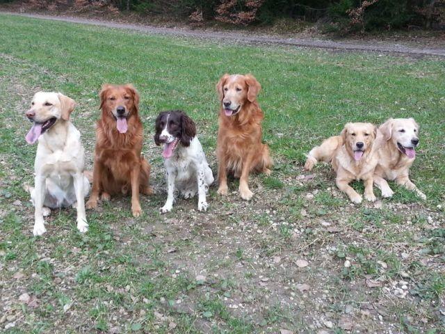 Bee, Bandit, Scott, Richie, Pride und Elly