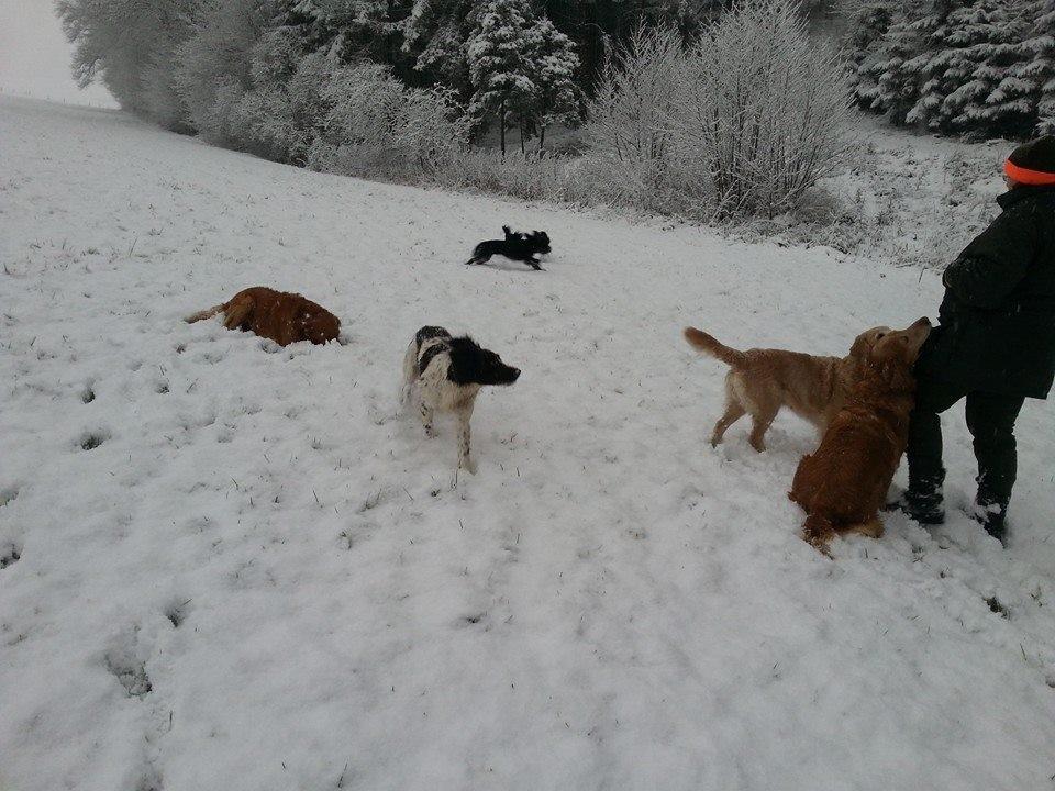 So schön ihnen zu schauen zu können wie viel Spaß sie haben im Schnee!