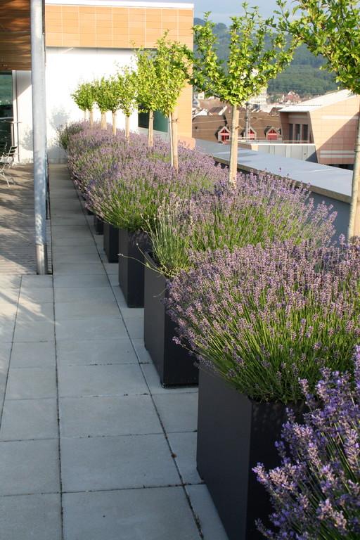 Terrassenbepflanzung Arkadis  |  Olten
