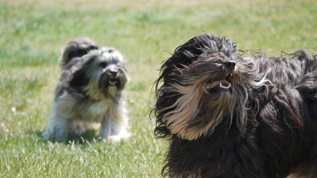 Finley und Holly