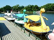 剛の池にある足こぎの    スワン(?)ボート      子供に大人気!