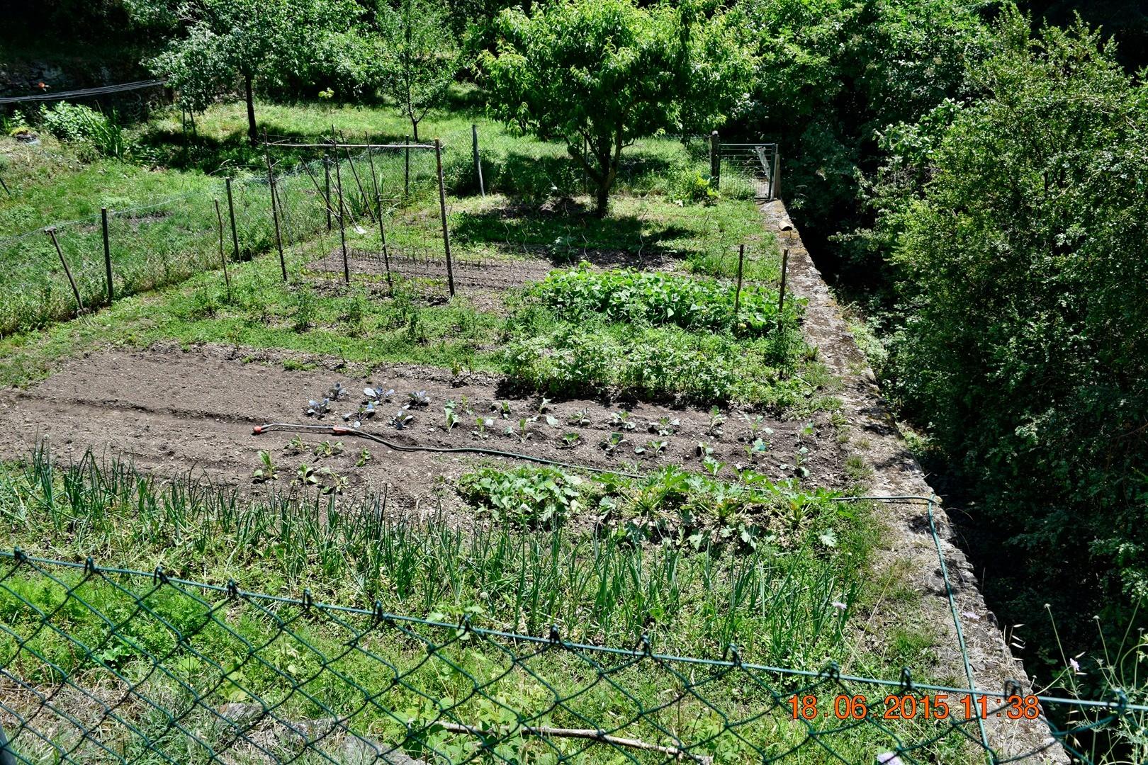 Garten ( viel Arbeit )