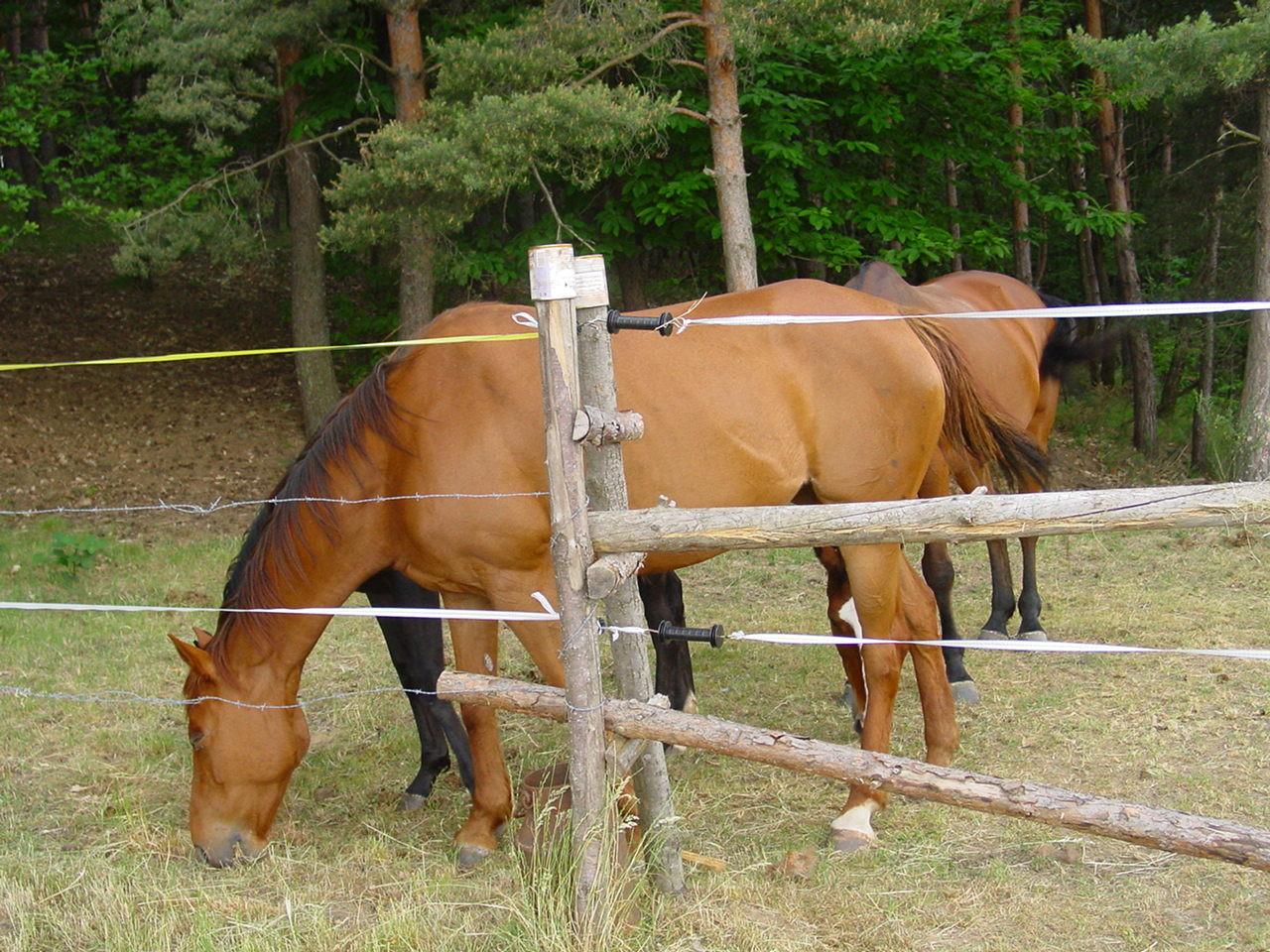 Die andern Pferde sind auf der Nachbarsweide