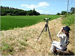 環境アセスメント(望遠鏡による観察・調査)