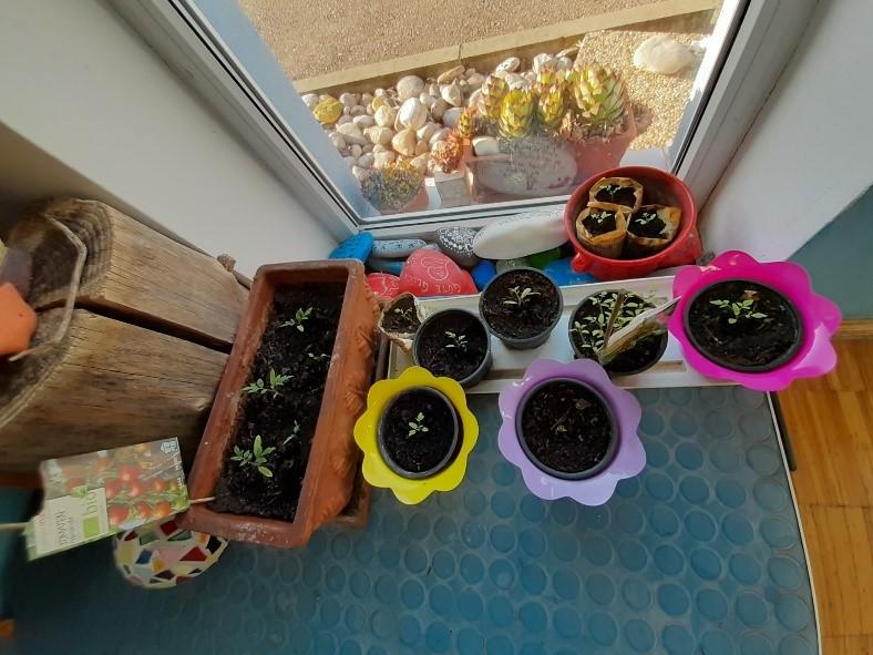 """... mit dem Pflanzen von Kräutern und Gemüse Struktur in den """"Corona Alltag"""" bringen..."""
