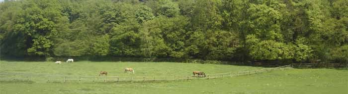 Viel Platz, auch für unsere Pferde...