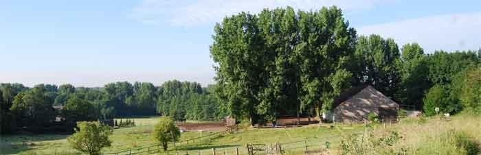 Der Reitplatz im Sommer... Schatten für Mensch und Tier...