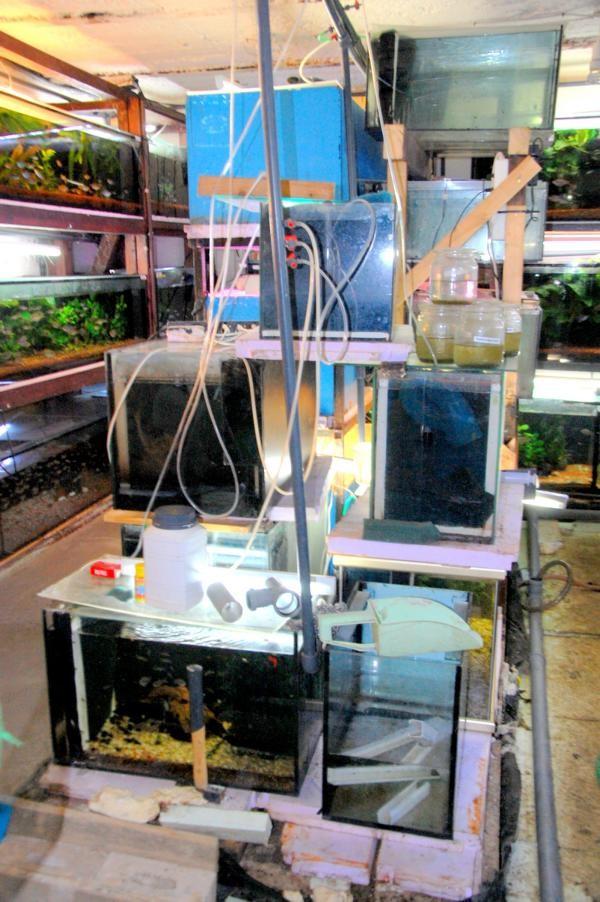 Umräumen der Aquarien ein absolutes Chaos