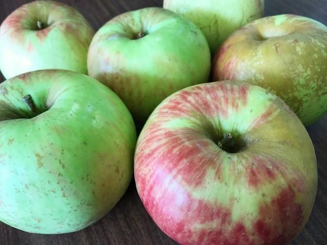 高畠から、今期初のりんごが届きました