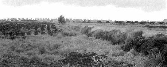 Moorlandschaft um 1950 - Torfsoden in Ringe und Haufen ausgestapelt