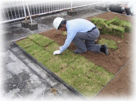 芝苗を植栽します